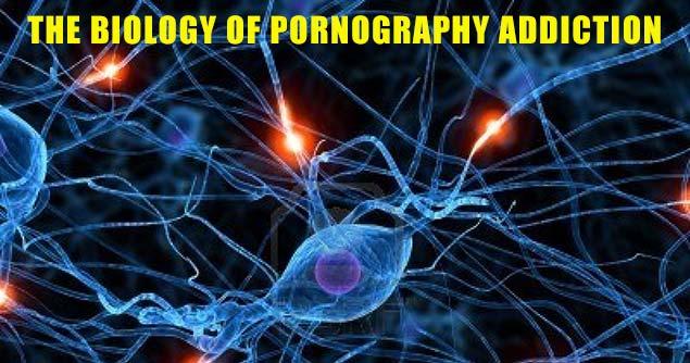 BiologyOfPorn_635x334