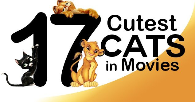 17-cutest-cats-slider